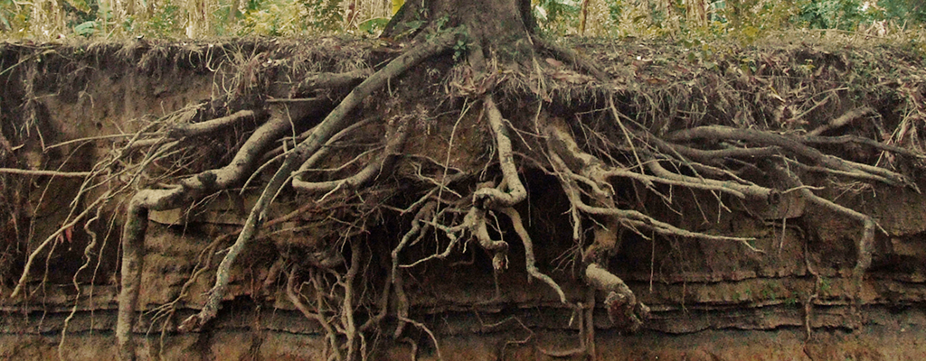 How Trees Amp Roots Affect Your Home Foundation Insights